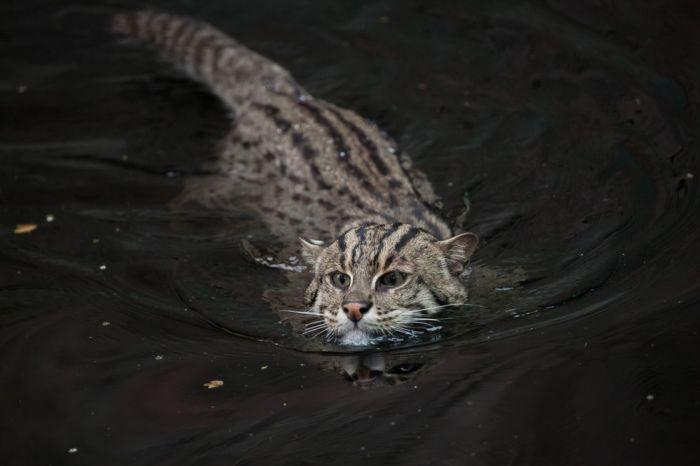 Найденный на улице котенок оказался не совсем обычным (10 фото)