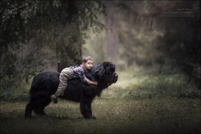 Маленькие дети с большими собаками