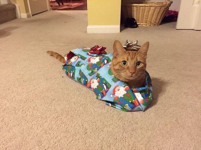 Животные против Нового года и Рождества