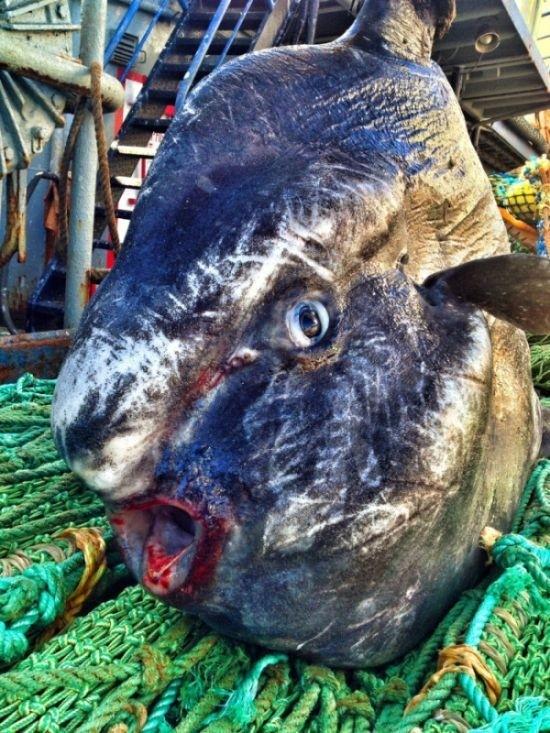 Мурманский моряк публикует фото странных глубоководных рыб, попавших в сети
