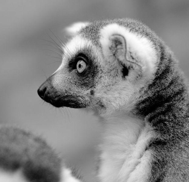 Забавные животные (60 фото)