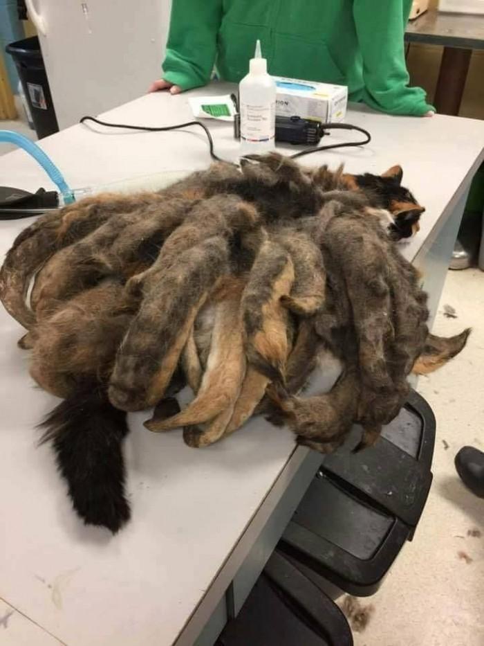 В центр защиты животных привезли кошку с дредами