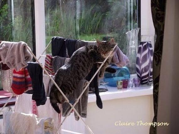 Котики отдыхают (45 фото)