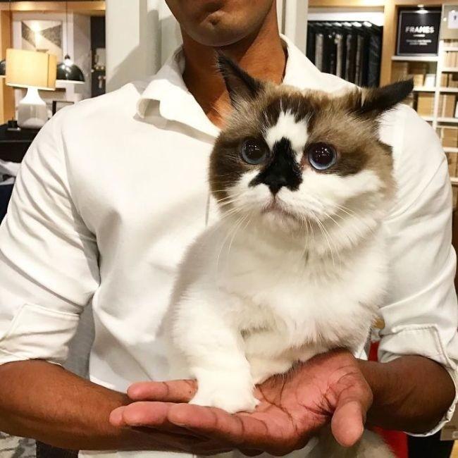 Кот Альберт - еще одна звезда соцсетей