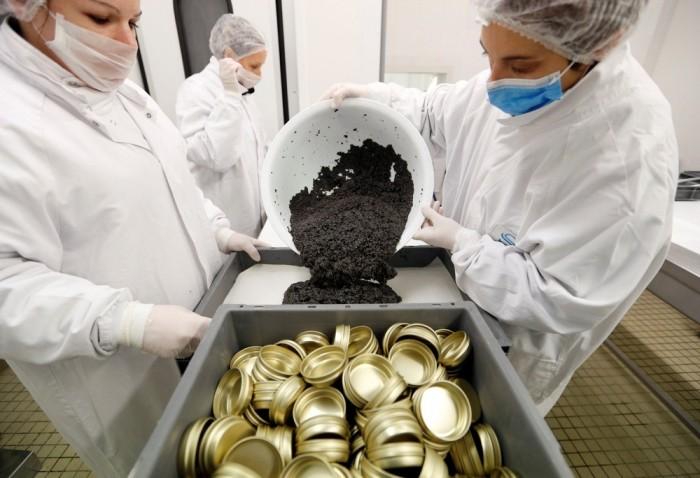 Производство черной икры во Франции