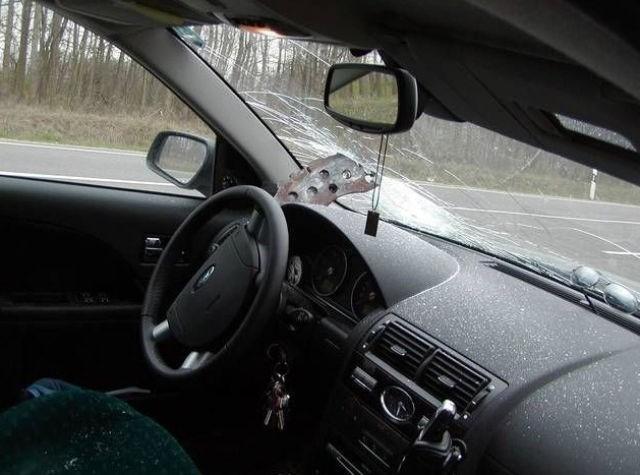Поймал сюрприз на дороге (5 фото)