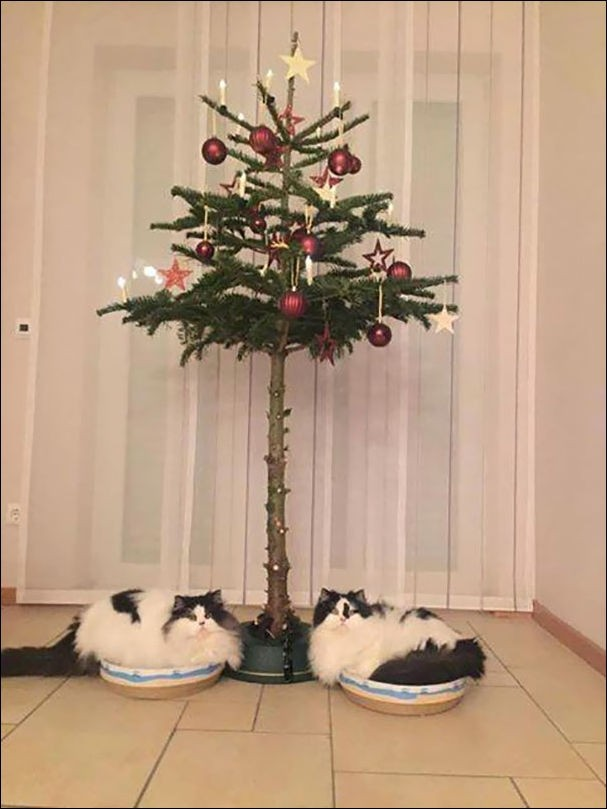 Как обезопасить елку от домашних животных