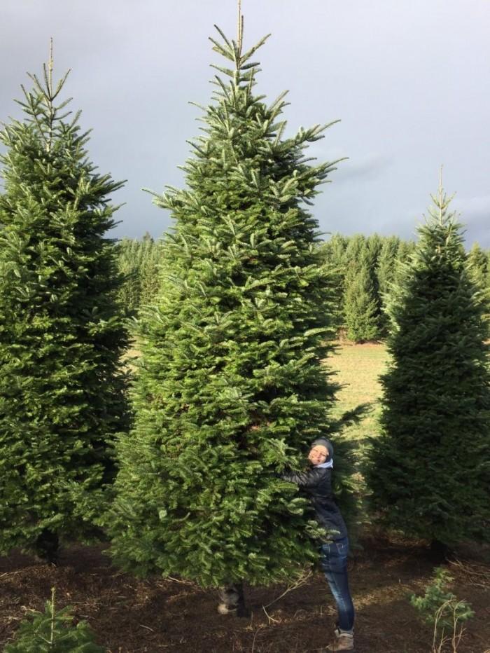 Как установить шестиметровую елку в пятиметровом доме
