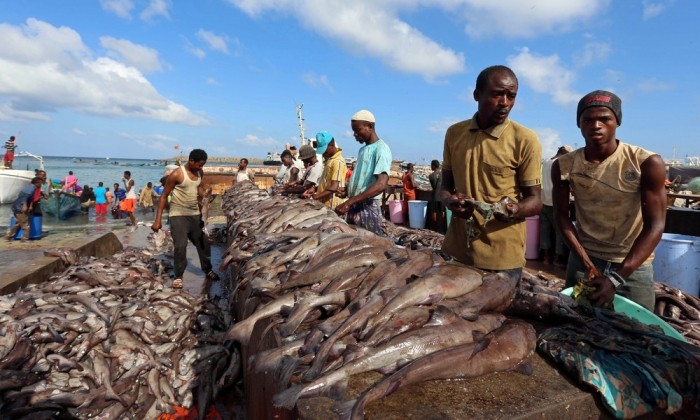 Рыболовный сезон в Сомали