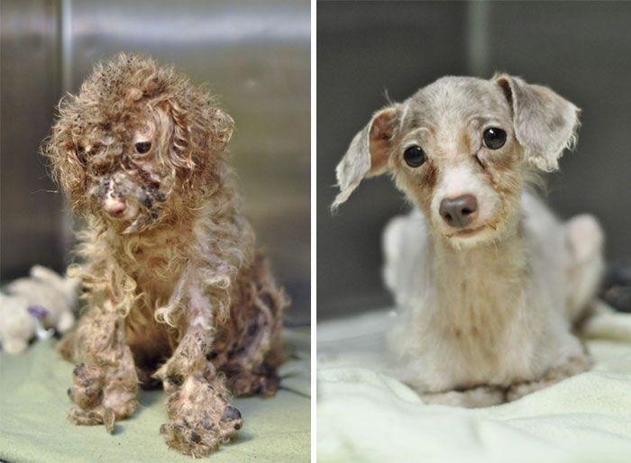 Собаки до и после спасения