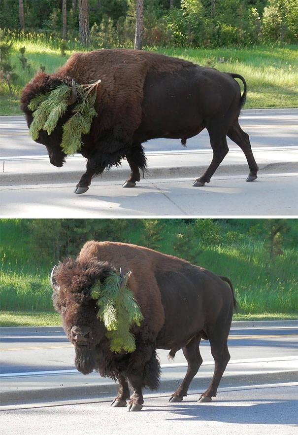 Фейлы с животными