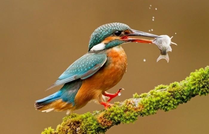 Удивительные снимки птиц