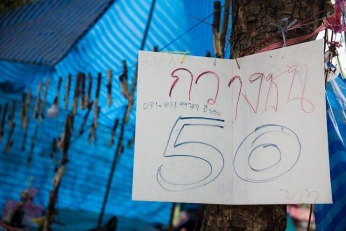 Чемпионат по боям жуков-носорогов в Таиланде (14 фото)