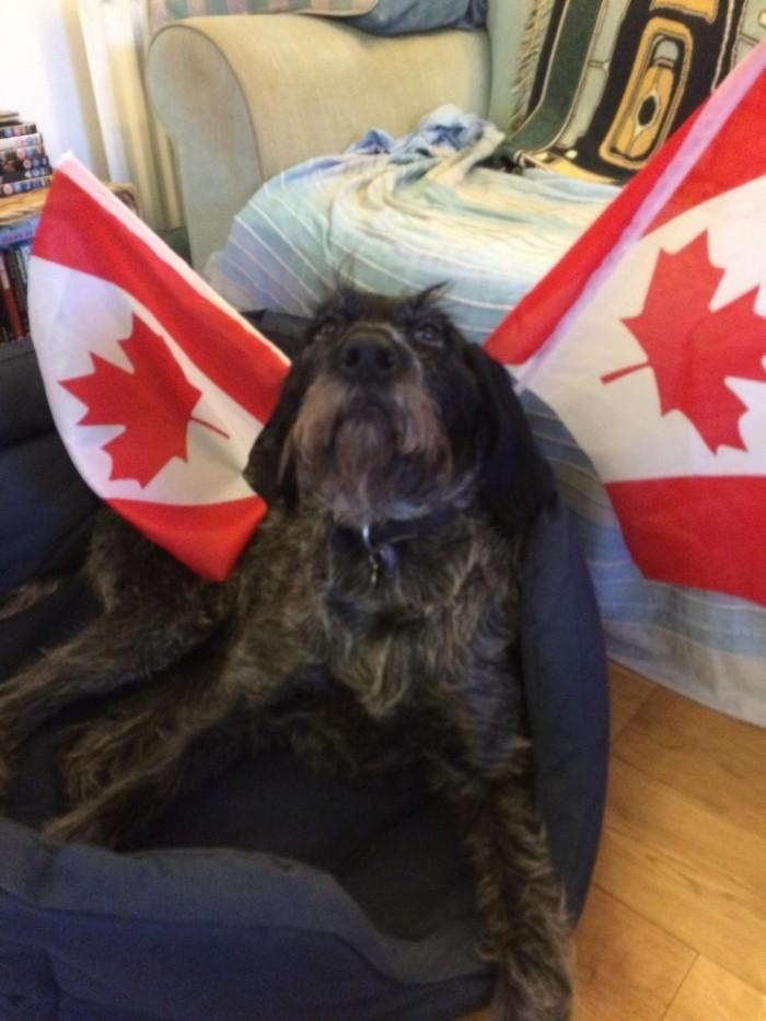 Странные снимки из Канады