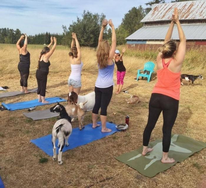 Козлиная йога