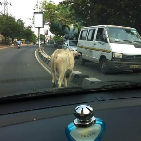 Странные фото из Индии