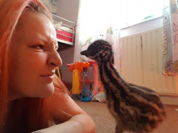 Девушка купила яйцо и высидела птицу эму