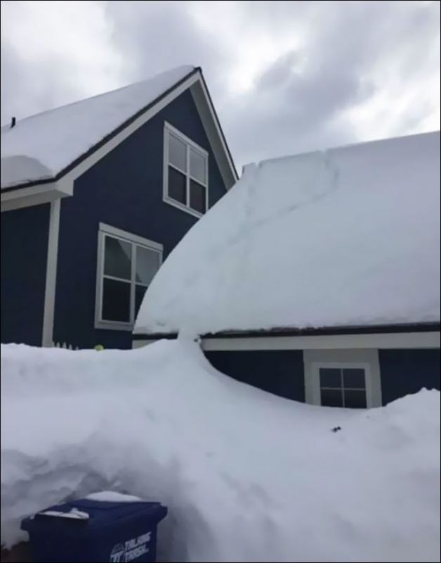 Лисы на крыше (3 фото)
