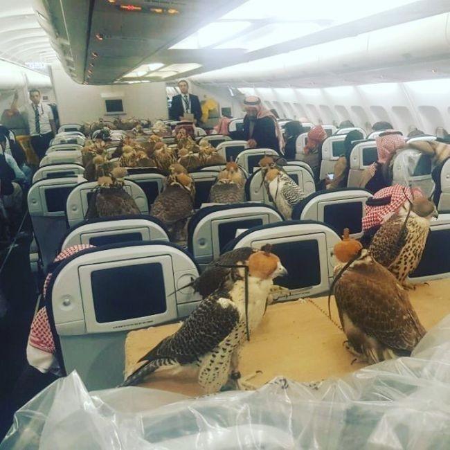 Принц купил 80 авиабилетов для транспортировки ястребов