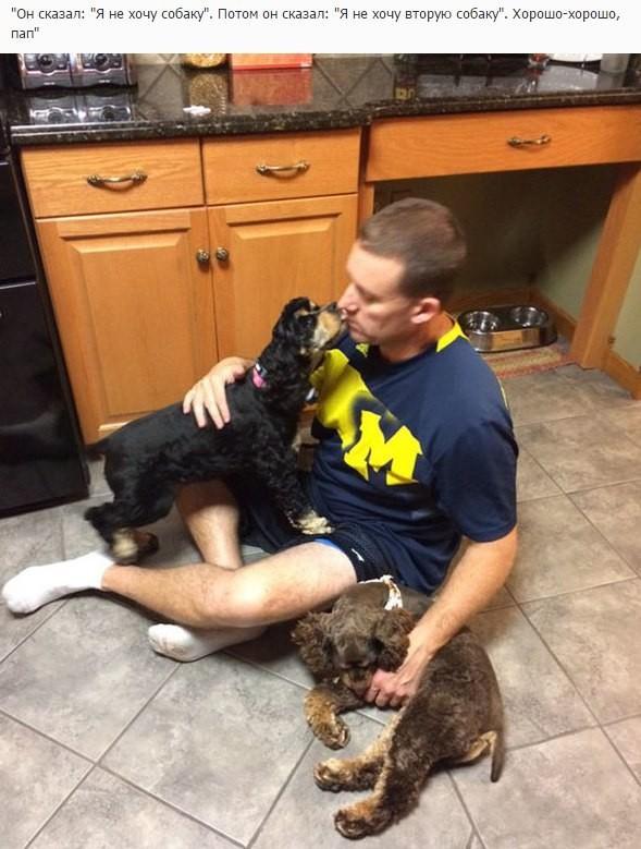 Еще недавно они были настроены против собак (10 фото)
