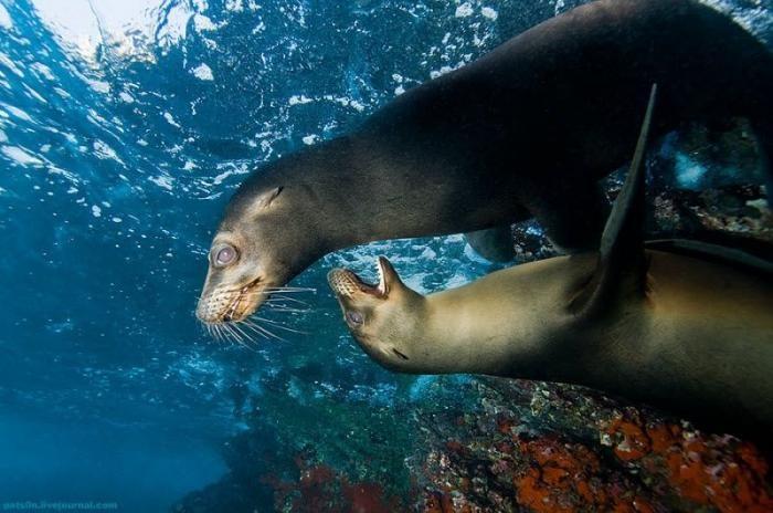 Шикарные фото океана (21 фото)