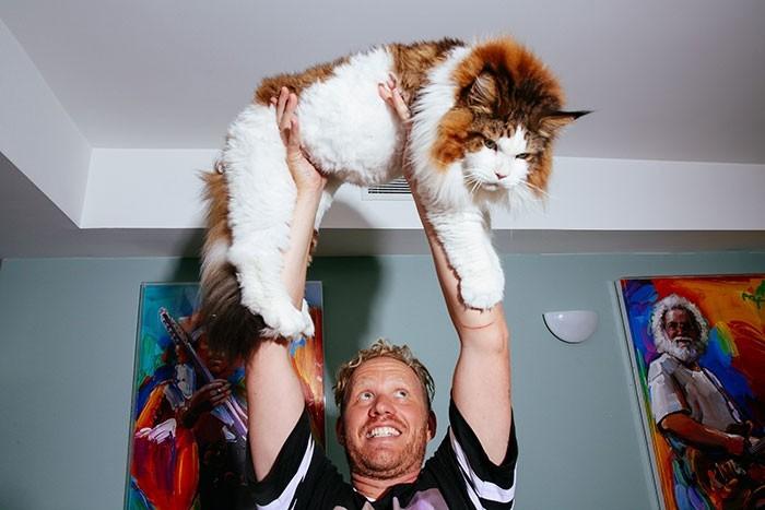 Самсон — большой кот Нью-Йорка, больше метра в длину и весом почти 13 килограмм