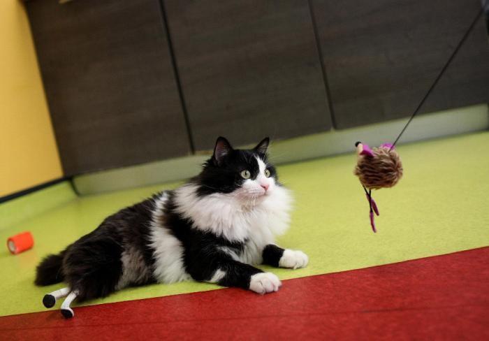 Бионический кот