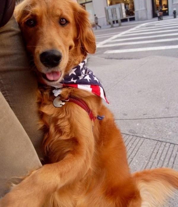Собака-обнимака (9 фото)
