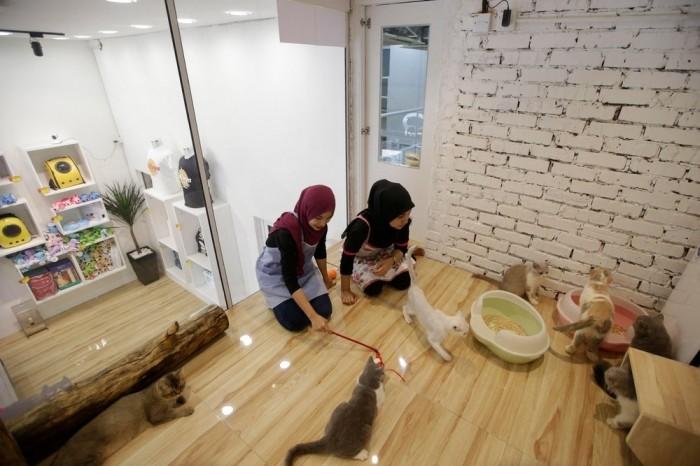 Первый в мире 5-звездочный отель для котов