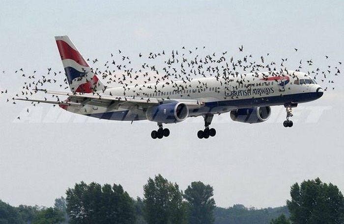 Самолетный юмор