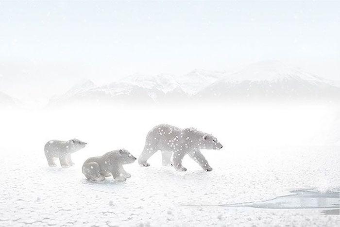 Фотограф делает прекрасные снимки живой природы, не выходя из дома