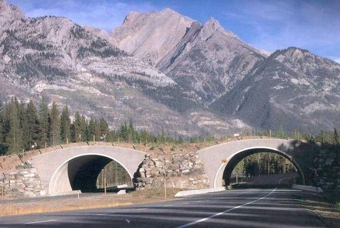 Мосты для животных