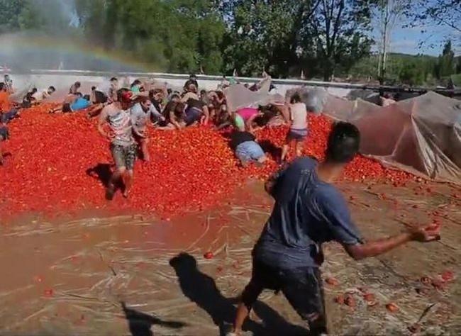 Битва помидорами в Чили