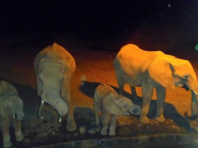 Житель Кении спасает животных от сильной засухи (8 фото)