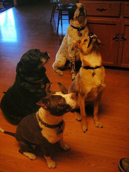 Мюррей - пес апокалипсиса