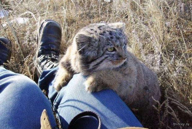 Фермер спас необычных котят (6 фото)