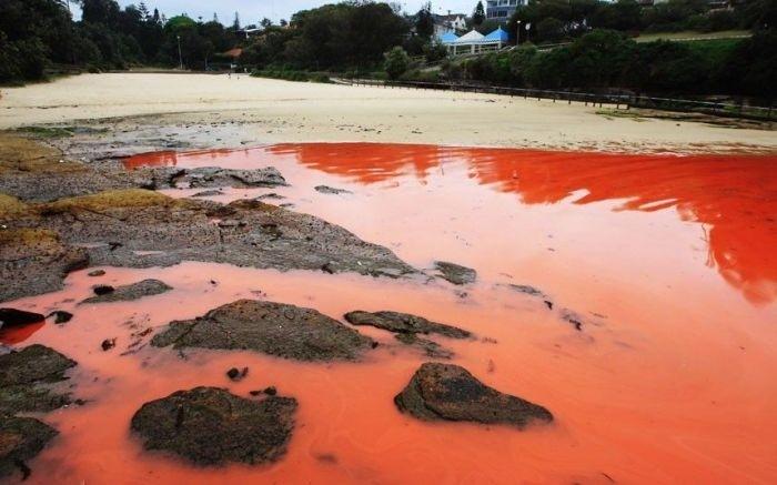 Кровавый океан (10 фото)