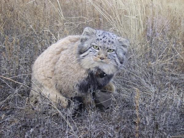 Фермер думал, что подобрал котят, но когда они подросли, его ждал сюрприз (7 фото)