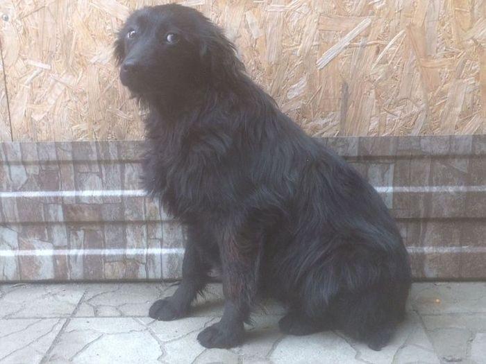 На Кубани спасли собаку (4 фото)