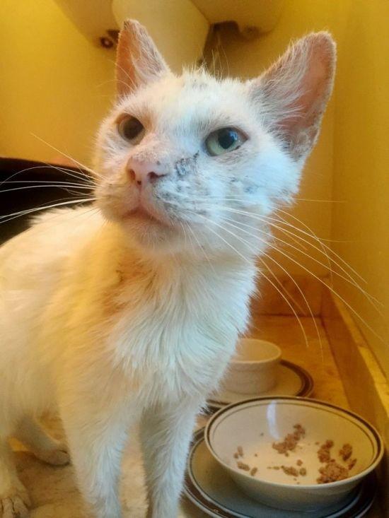 Спасенный бездомный кот удивил всех красотой своих глаз (8 фото)