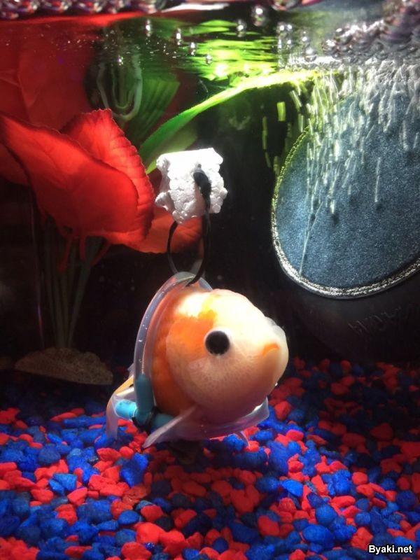 Индивидуальное инвалидное кресло для аквариумной рыбки с патологией