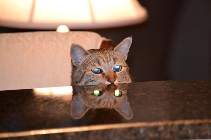 Странные коты (38 фото)