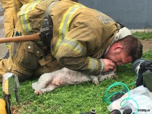 Пожарный реанимировал собаку, спасенную из пожара (8 фото)