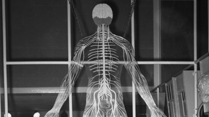 Странные способности нашего тела (7 фото)