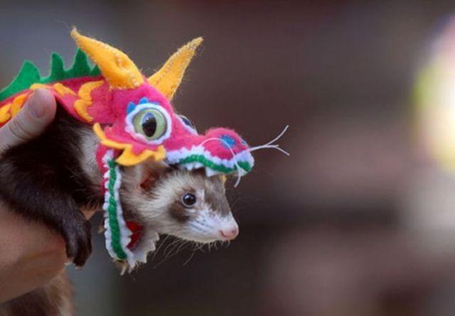 Забавные животные (65 фото)