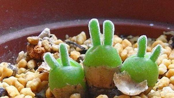 Японские ботаники разводят растения в виде дельфинов и кроликов (10 фото)