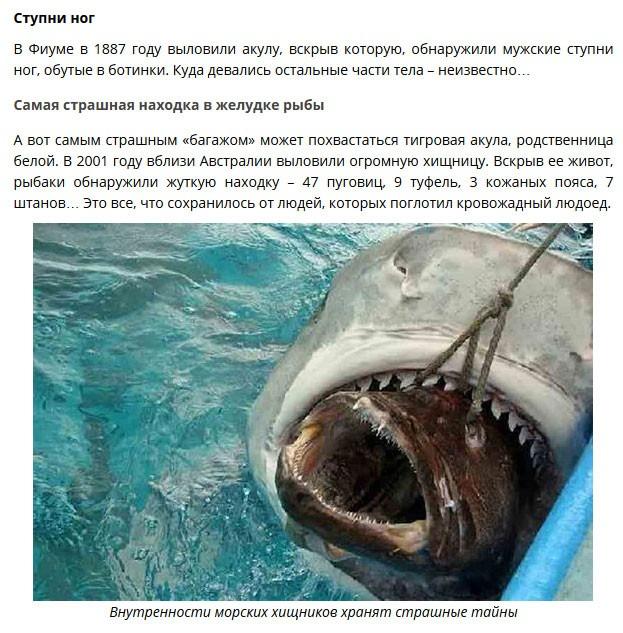 Удивительные находки в желудках акул (8 фото)