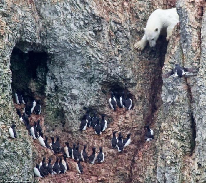 Медведь пришел на охоту (6 фото)