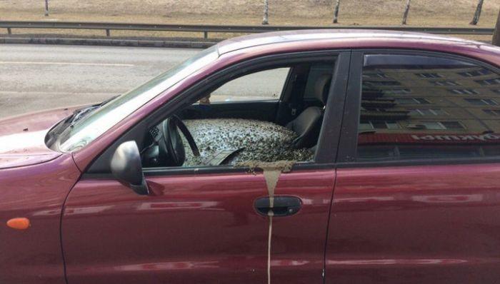В Санкт-Петербурге мужчина залил бетоном машину жены (4 фото)