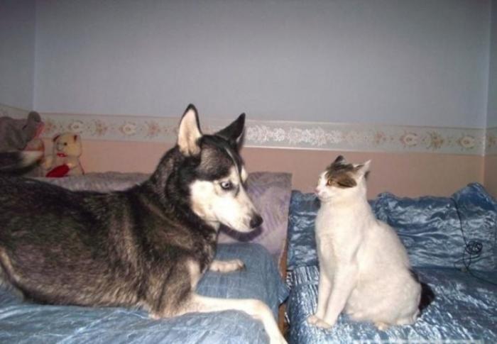 Жестокая бойня кошки и собаки (3 фото)